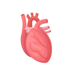 cartoon of human heart central organ vector image