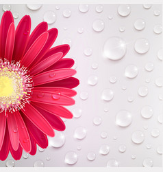 Gerbera flower on a background of water droplets vector