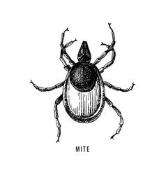 hand drawn wood tick vector image