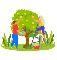 harvesting farmers man and woman picking pears vector image