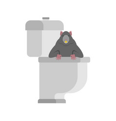 rat in toilet rodent is in wc anti-santry dirty vector image