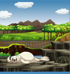 Scene with white seal in zoo vector