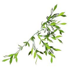 Creepy Plant vector