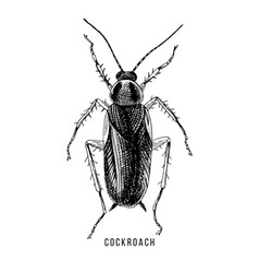 hand drawn cockroach vector image
