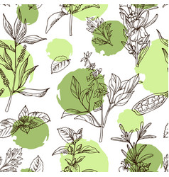 hand drawn herbs and spices decorative background vector image