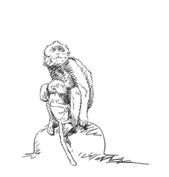 Monkey female with cub sketch macaque mom vector