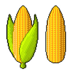 pixel sweet corn detailed isolated vector image