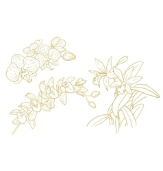 Set of one-colored outlined orchids vector image vector image