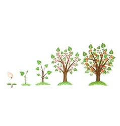 Apple tree growth vector