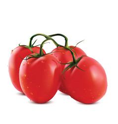 Big ripe red fresh tomatoes vector