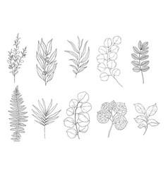 botanical set black and white graphic plant vector image