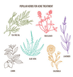 Collection herbs for acne treatment vector