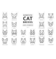 Domestic cat breeds and hybrids linear portraits vector