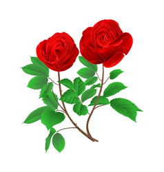stem buds red roses with leaves vintage vector image