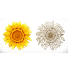 sunflower 3d realism and engraving styles vector image