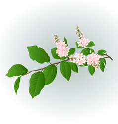 Twig pink Lilac natural background vector