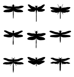 silhouettes of dragonflies vector image