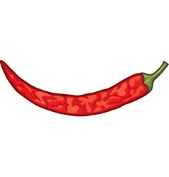 Dried spicy red pepper vector image