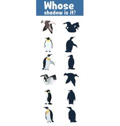 Game where whose shadow antarctica wild birds vector