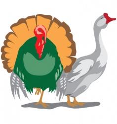 goose turkey vector image