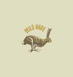Wild hare or rabbit engraved hand drawn in old vector