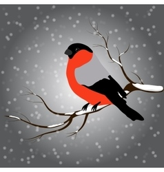 Bullfinch on the fir branch snowfall Winter or vector image