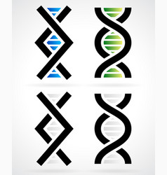 dna strand helix vector image