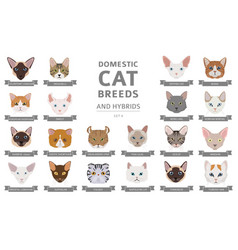 Domestic cat breeds and hybrids portraits vector