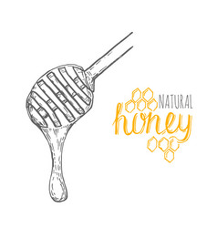 hand drawn honey stick over white background vector image
