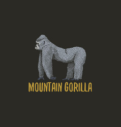 mountain gorilla engraved hand drawn in old sketch vector image vector image