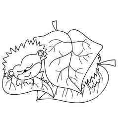 cute cartoon hedgehog sleeping vector image