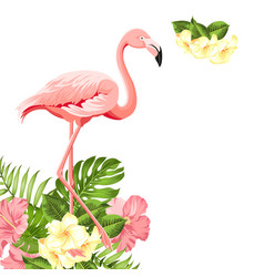 beautiful tropical image with pink flamingo vector image