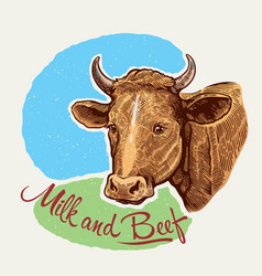 cows head in a graphic style hand drawn vector image