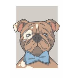 english bulldog with bowtie vector image