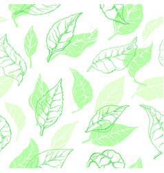 nature seamless pattern tea leaves vector image