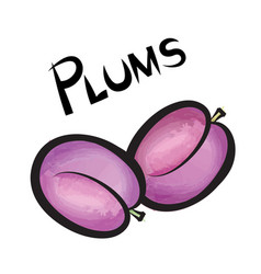plums sign isolated plum fruit tag fresh farm vector image