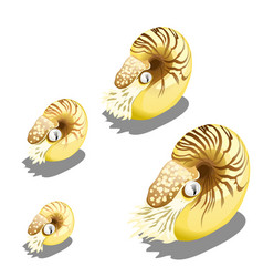 the stage of growth of the nautilus pompilius vector image