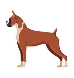 Boxer purebred dog pet animal side view vector