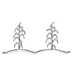 Corn plant vintage vector