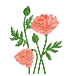 cute summer poppy flowers characters vector image