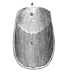 Surface of a nail vintage vector