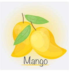 yellow mango vector image