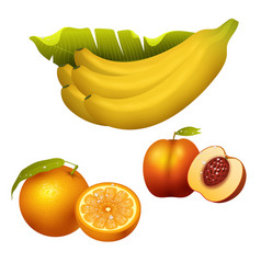 Ripe fruits realistic juicy healthy vector