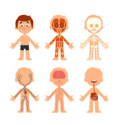 Cartoon boy body anatomy human biology systems vector