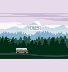 highway drive with beautiful spruce forest vector image