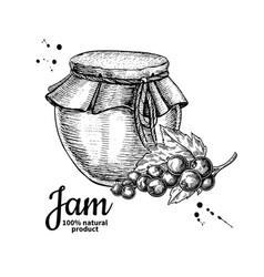 Red currant jam glass jar drawing fru vector