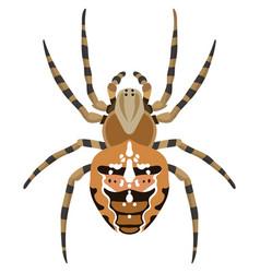 Spider araneus diadematus vector