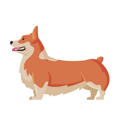 welsh corgi purebred dog pet animal side view vector image
