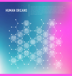human internal organs concept in honeycombs vector image