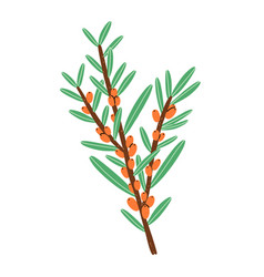 little branch with sea buckthorn berries vector image